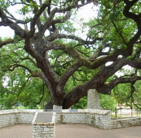 Founder's Oak Tree - Wedding Location
